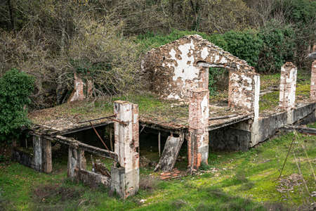 Ruined building located in the middle of a lush forest