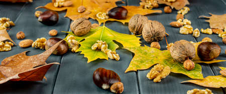Autumn leaves of various colors with nuts, chestnuts, hazelnuts and almonds on a gray wooden board 写真素材