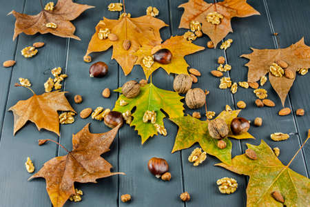 Still life of autumn leaves with chestnuts, hazelnuts, walnuts and almonds on gray wooden board