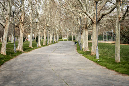 Tiled path printed on concrete in a park with a multitude of leafless trees on the sides of the road and street lamps in autumnal atmosphere