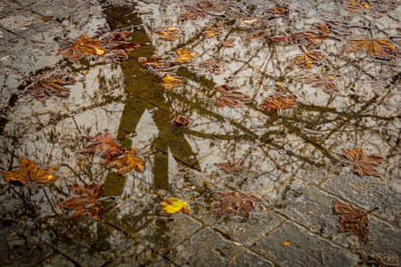 Reflection of the branches of a tree in a puddle of a park in the autumn time at sunset Standard-Bild - 140373331
