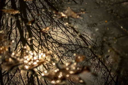 Reflection of the branches of a tree in a puddle in the autumn time at sunset Standard-Bild - 140372842