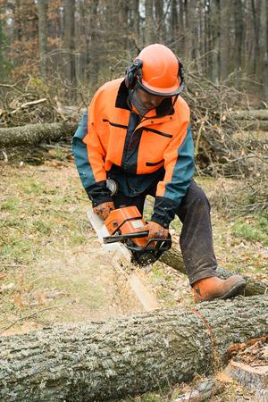 Bosbouw werknemer met kettingzaag zaagt een logboek. Steekproef van werkzaamheden op het bos kappen