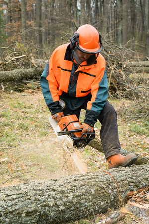 CO2 emissions: Forestry worker with chainsaw is sawing a log. Sample of works on forest logging Stock Photo