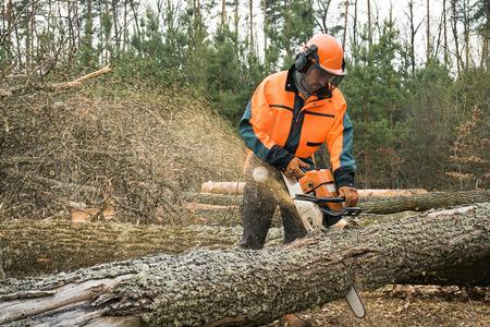 전기 톱으로 임업 노동자 로그를 절단한다. 숲 로깅에 작품 샘플