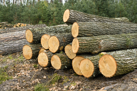CO2 emissions: Fresh piled tree after clear-cutting Stock Photo