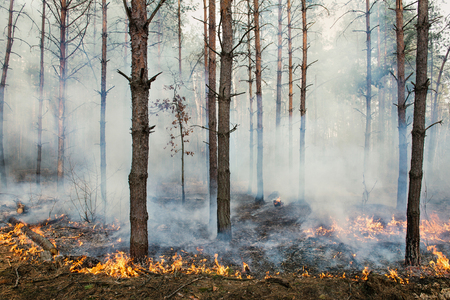 CO2 emissions: Forest fire and clouds of smoke in pine stands Stock Photo