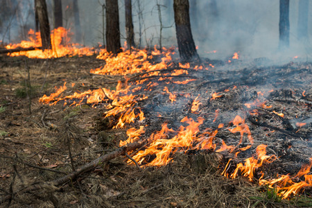 co2 emissions: Running (fast) ground fire in pine stand