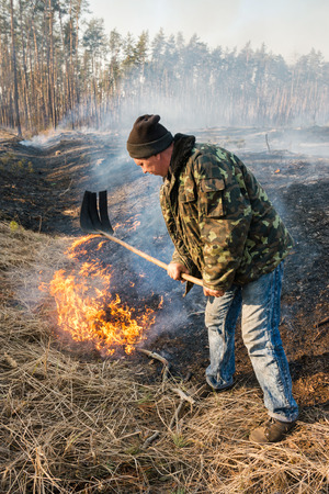 intensity: BOYARKA, UKRAINE - 26 MART 2015: Firefighter or firemen in forest fire. It was controlled forest fire or prescribed burning using low intensity surface fire for promoting reforestation in the mature pine stand.