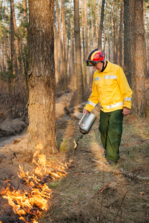 forest fire: BOYARKA, UKRAINE - 26 MART 2015: Firefighter or firemen in forest fire. It was controlled forest fire or prescribed burning using low intensity surface fire for promoting reforestation in the mature pine stand.