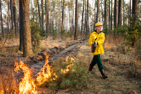 BOYARKA, UKRAINE - 26 MART 2015: Firefighter or firemen in forest fire. It was controlled forest fire or prescribed burning using low intensity surface fire for promoting reforestation in the mature pine stand.