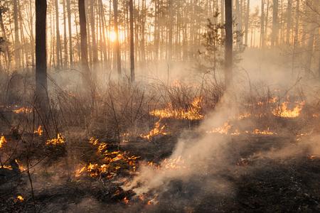 夕日を背景に森林火災。炎と煙で覆われて全体の面積 写真素材