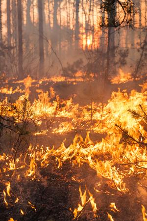 夕日を背景に森林火災。炎によってカバーされる全体の区域
