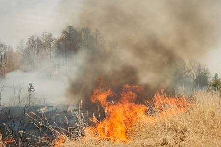 prescribed: Big fire on agricultural land near forest. Flame and clouds of dark smoke
