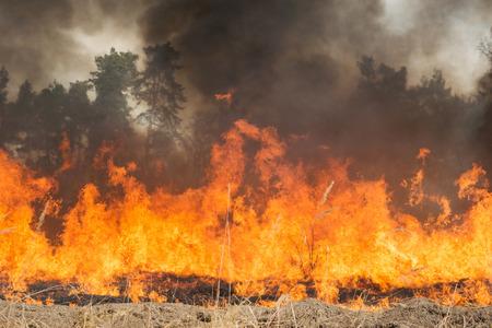 Brand op landbouwgrond in de buurt van het bos. Grote vlam en wolken van donkere rook Stockfoto
