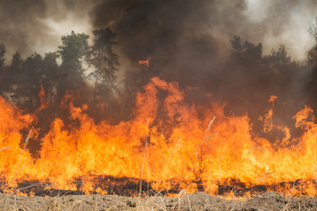 carbon emission: Fire on agricultural land near forest. Big flame and clouds of dark smoke