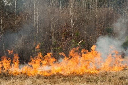 Fire on agricultural land near forest. Wildfire in progress Stock Photo