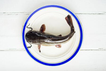 bullhead: Fresh catfish fish on plate with blue line and white background