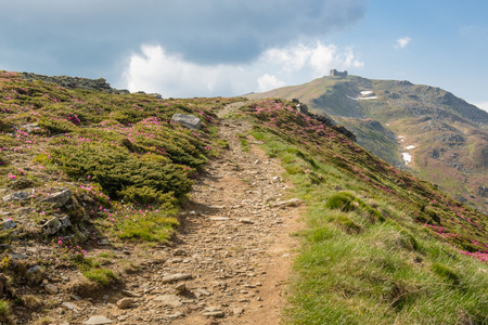 pip: Mountain path through blooming rhododendron valley with Polish Astronomical and Meteorological Observatory on Pip Ivan peak on background Stock Photo