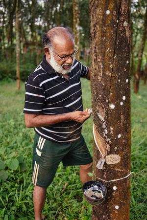 ARANMULA, INDIEN - 5. DEZEMBER: Authentischer asiatischer Mann, der in der Gummibaumplantage arbeitet