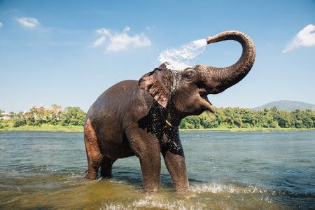 lavado de elefante en los bancos del sur del río Periyar en el centro de formación Kodanad