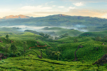 Munnar theeplantages met mist in de vroege ochtend bij zonsopgang. Kerala, India
