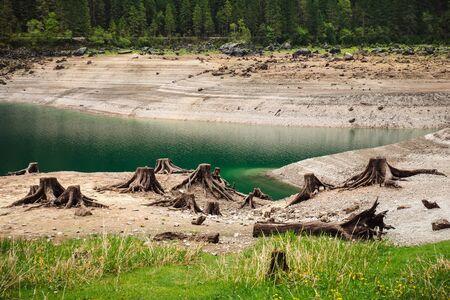 deforestacion: tocones despu�s de la deforestaci�n situados alrededor del lago de monta�a