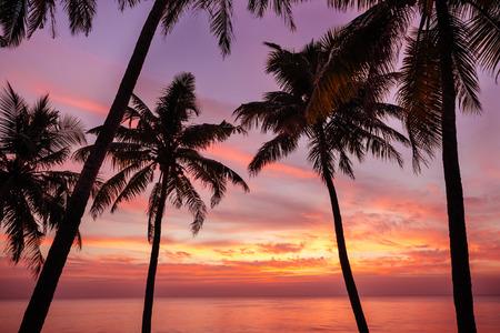 varkala: Palm tree and beautiful sunset on Varkala black beach. Kerala, India