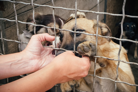 People save and help homeless dogs in animals shelter Stock Photo