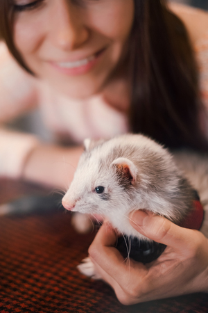 Pet ferret held in hands on background of its happy owner, in a cafe. Selective focus. Woman and a pet concept. Stock Photo