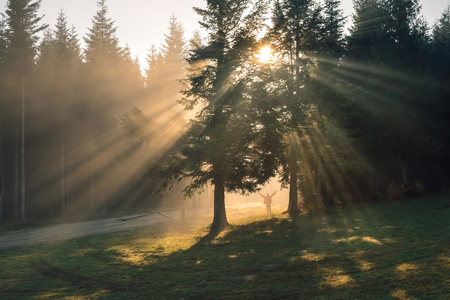 Inspiring sunrise that dispels the fog in the forest, throwing visible arrows of rays for awakening nature in Autumn and a man silhouette standing between trees feeling the moment.