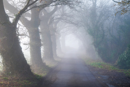 looking down a tree lined English country lane in the mist, the foreground is clear but gets more foggier in the distance. Stockfoto