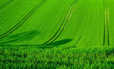 A rolling green wheat field on a hill with four seperate lines of tractor tyre tracks running vertically up the green field, Sussex, England  the lines in the field form graphic and shapes