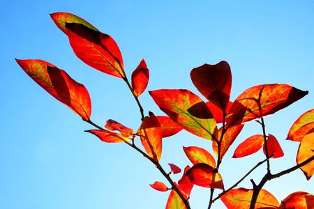 close up of branches holding red and green oval leaves, against a blue sky, graphical shapes.