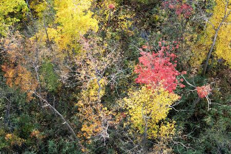 looking down on a thick woodland in the fall, the tree canopy is golden, red, yellow, sunlight is shining onto the trees. Olana State Historic Site, Hudson, New York State, USA 免版税图像