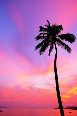 A vibrant red sky over a tropical bay with a calm sea and a silhouette palm tree, Red glow from the setting sun over Viaguinim Beach, Panaji, Goa, India, vertical format