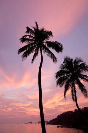 A red sky and over tropical bay with a calm sea and silhouetted palm trees, Red glow from the setting sun over Viaguinim Beach, Panaji, Goa, India, vertical format, copy space,