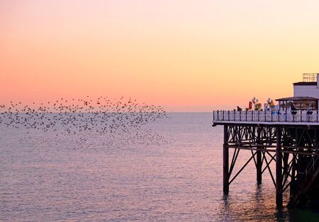 Part of Brighton pier jutting out over the sea on the right, on the left hundreds of starlings in beautiful murmuration flying over the sea the sun is setting painting very hing in an orange glow.