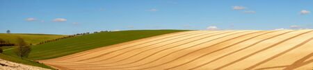 Panorama landscape of curved lines and graphical shapes of a ploughed field and rolling green hills with a blue sky and white fluffy clouds over the farmland on the Sussex downs, Sussex, England, UK 免版税图像
