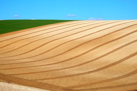 Curved lines and graphical shapes of a ploughed field with a blue sky and white fluffy clouds of the rolling farmland on the Sussex downs, Sussex, England, UK