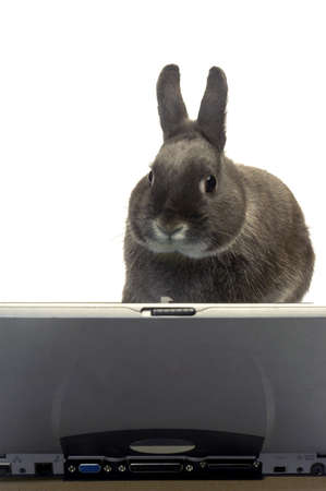 rabbit to illustrate the webmaster e-commerce   photo