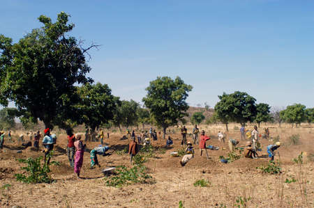 goldmine: To the goldmine of Poura the gold diggers come from everywhere in the hope of finding a little gold after the season of the cultures. Women, children and men of very old are here in a universe of dust under a blazing sun. In Burkina Faso Faso the research Editorial