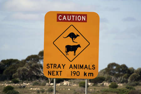 Crossing of wild animals on the Australian roads photo