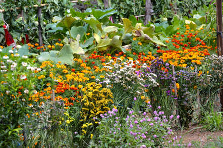 maintained: a well maintained garden Stock Photo
