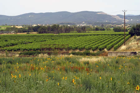 agricultural landscape of the Cevennes photo