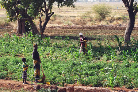 the vegetable crops in Burkina Faso is the main activity in the summer when there is rain to irrigate and make a reservation of nourishment for the year