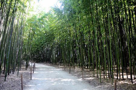 promoted: Park Anduze bamboo where almost all species are represented and promoted in an Asian garden Stock Photo