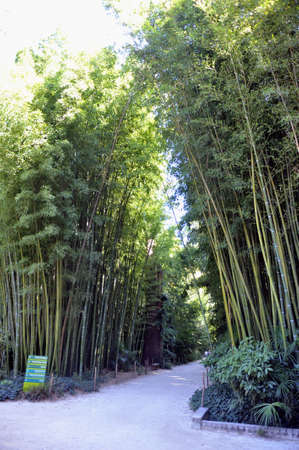 promoted: gate of the Japanese garden entrance in park Anduze bamboo where almost all species are represented and promoted in an Asian garden
