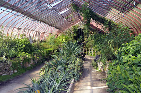 almost all: tropical greenhouses park Anduze bamboo where almost all species are represented and promoted in an Asian garden
