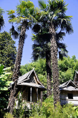 almost all: bamboo house in the park Anduze bamboo where almost all species are represented and promoted in an Asian garden Stock Photo